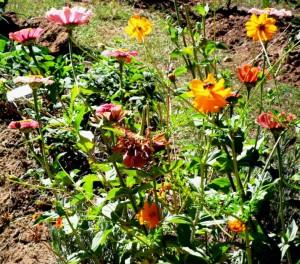 Francis Herb.Flower Farm