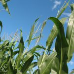 Family Farmers Applaud Defeat of Regressive House Farm Bill